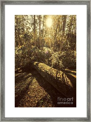 Forest In Fall Framed Print by Jorgo Photography - Wall Art Gallery