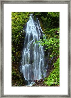Forest Lace Framed Print by Mike Dawson
