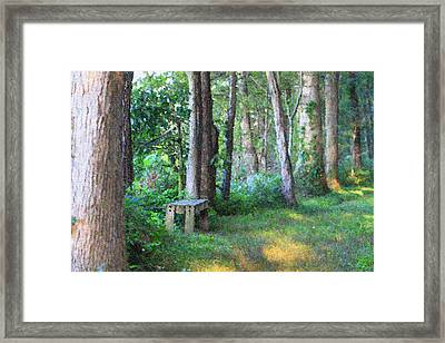 Forest Meditation In Summer Framed Print by Dan Sproul