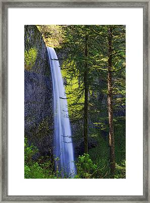 Forest Mist Framed Print by Chad Dutson