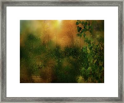 Forest Moods Framed Print by Carol Cavalaris