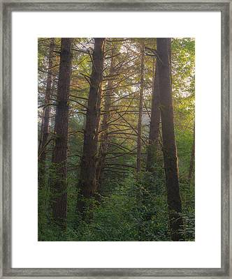 Forest Morning Framed Print by Joseph Smith