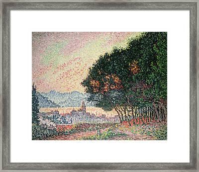 Forest Near St Tropez Framed Print by Paul Signac