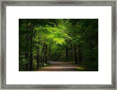 Forest Path Framed Print by Parker Cunningham