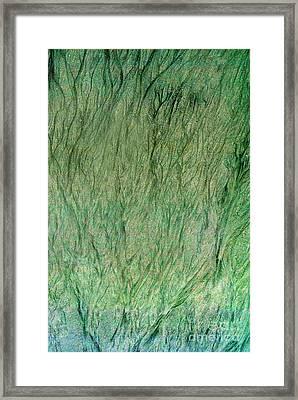 Forest Primordial Framed Print by Skip Willits