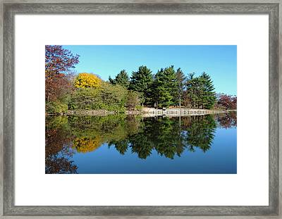 Forest Reflections Framed Print by Teresa Schomig