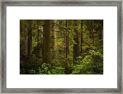Forest Serenity Framed Print by Thorsten Scheuermann