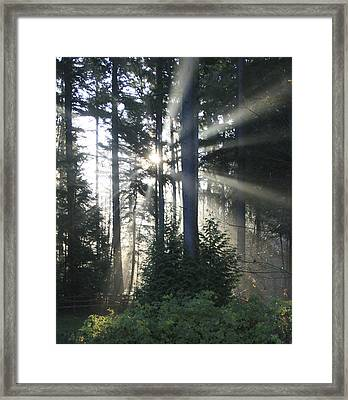 Forest Sunrise Framed Print by Crista Forest