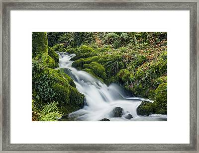 Forest Treasures  Framed Print by Ian Mitchell