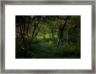 Forestland In Sudbury Ma Wayside Inn Framed Print by Toby McGuire
