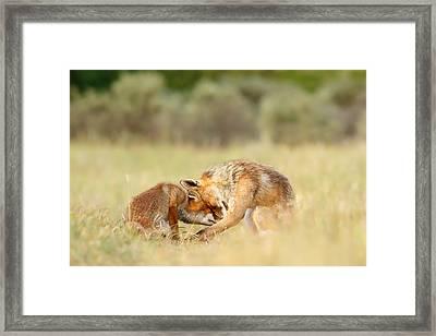 Foreverandeverandever - Red Fox Love Framed Print by Roeselien Raimond