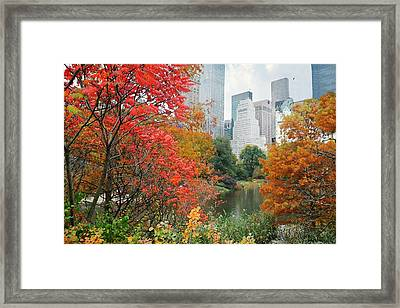 Forget Me Nots Framed Print by Diana Angstadt