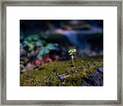 Forlorn Hope Framed Print by Marcio Faustino