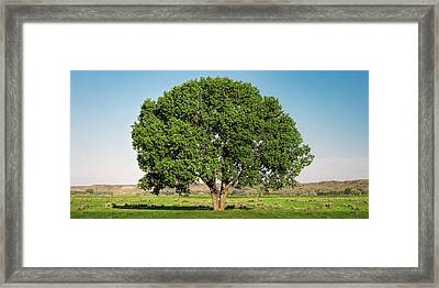 Fort Keough Tree Framed Print by Todd Klassy