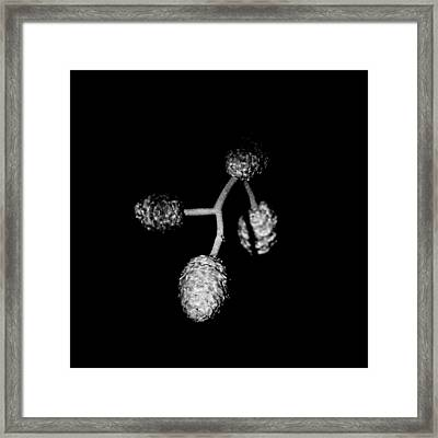 Four Buds Framed Print by Toppart Sweden