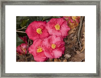 Four Flowers Framed Print by Don  Wright