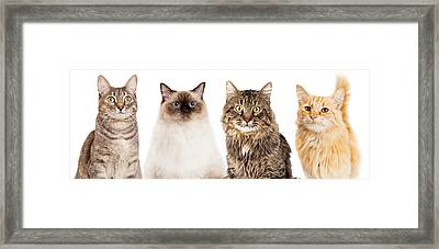 Four Happy Cats Website Banner Framed Print by Susan Schmitz