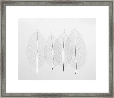 Four Leafs Framed Print by Bekare Creative