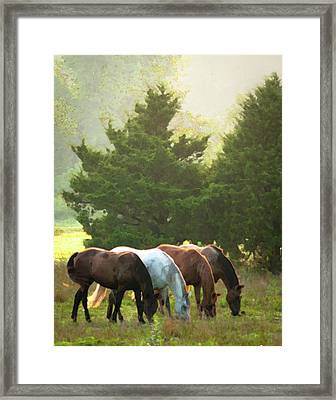 Four Of A Kind Framed Print by Ron  McGinnis