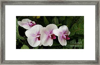 Four Orchid Friends Framed Print by Jasna Gopic
