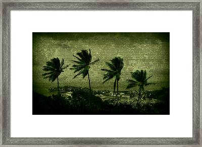 Four Palms Framed Print by Perry Webster