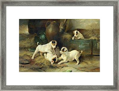 Four Puppies At Play Framed Print by Walter Hunt