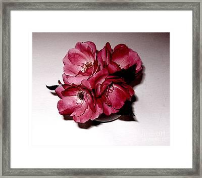 Four Roses Framed Print by Marsha Heiken
