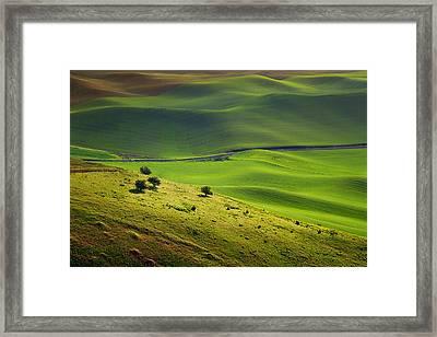 Four Trees - Palouse - Washington Framed Print by Nikolyn McDonald