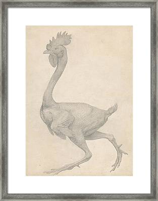 Fowl, Lateral View With Most Feathers Removed  Framed Print by George Stubbs