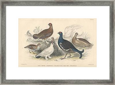 Fowl Framed Print by Oliver Goldsmith