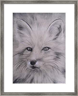 Fox Framed Print by Adrienne Martino