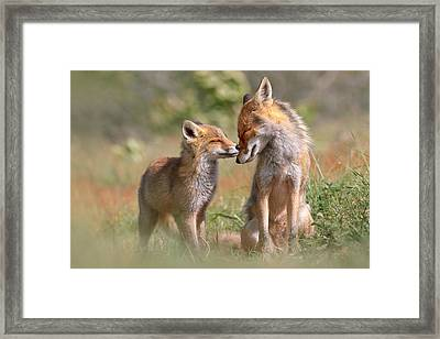 Fox Felicity II - Mother And Fox Kit Showing Love And Affection Framed Print by Roeselien Raimond