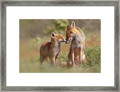 Fox Felicity Framed Print by Roeselien Raimond