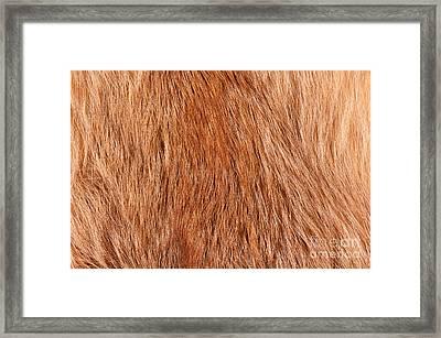 Fox Fur Texture Cloth Abstract Framed Print by Arletta Cwalina