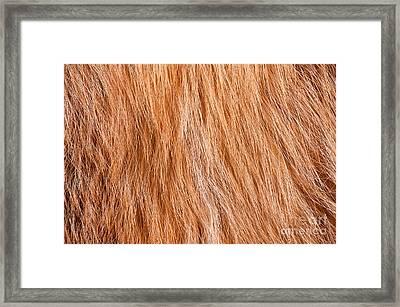 Fox Furry Texture Cloth Abstract Framed Print by Arletta Cwalina