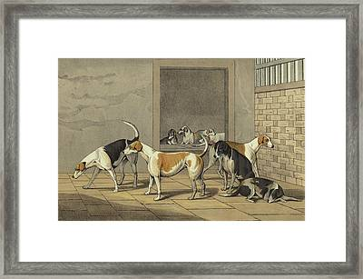 Fox Hounds Framed Print by Henry Thomas Alken