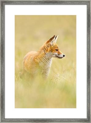Fox In Thoughts Framed Print by Roeselien Raimond