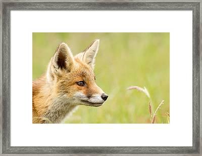 Fox Kit Dreams Framed Print by Roeselien Raimond