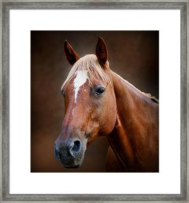 Fox - Quarter Horse Framed Print by Sandy Keeton