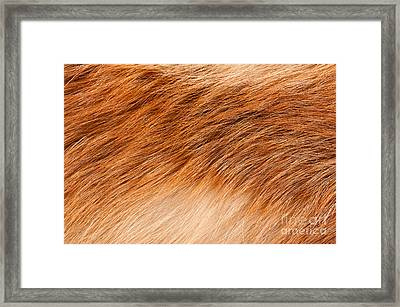Fox Rusty Fur Texture Cloth Framed Print by Arletta Cwalina