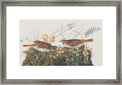 Fox Sparrow Framed Print by John James Audubon