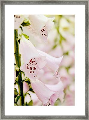 Foxglove Floral Framed Print by Jessica Jenney
