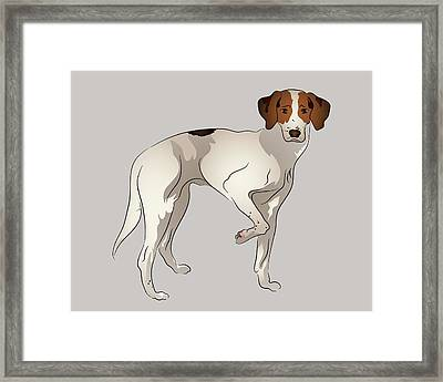 Foxhound Framed Print by MM Anderson