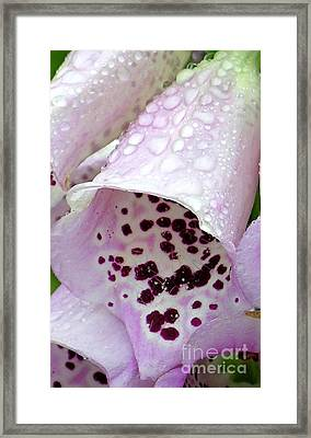 Foxy Foxglove Framed Print by Diane Greco-Lesser