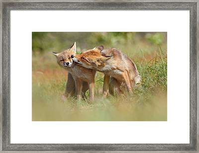 Foxy Love Series - But Mo-om II Framed Print by Roeselien Raimond