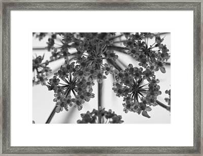 Fractal Flower Photoset 02 Framed Print by Ryan Kelly