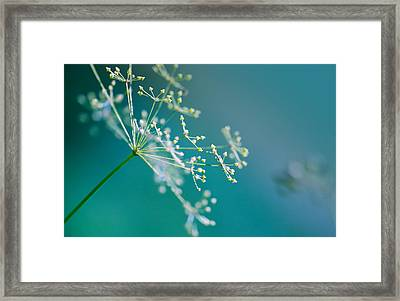 Fragile Dill Umbels Framed Print by Nailia Schwarz