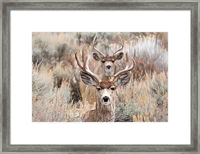 Framed Framed Print by Donna Kennedy