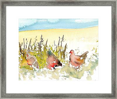 Free Range Framed Print by Carolyn Doe