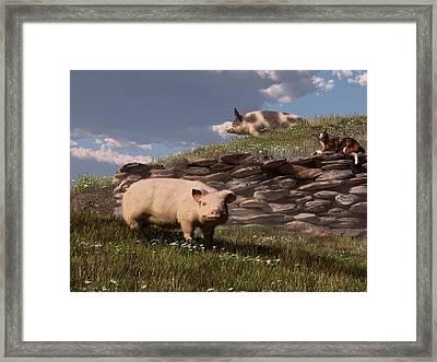 Free Range Pigs Framed Print by Daniel Eskridge